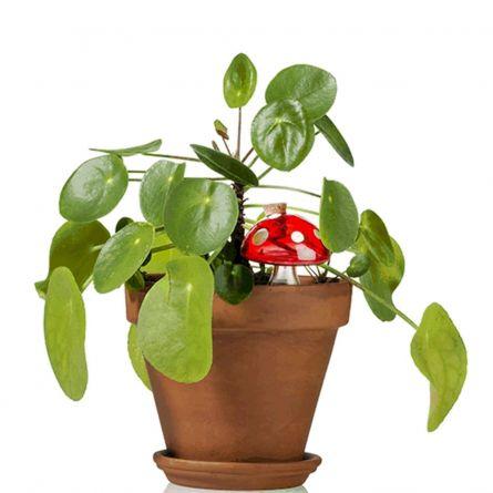 Champignon d'eau Pour les Plantes d'intérieur