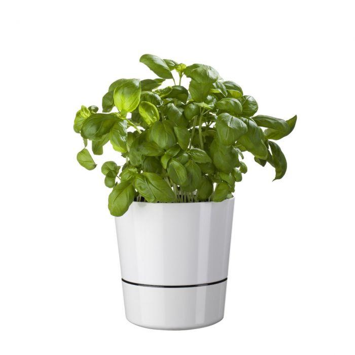 Pots de fleurs Herb Hydro
