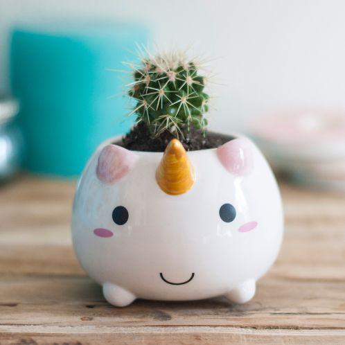 Cadeau anniversaire - Mini Pot de fleur Licorne